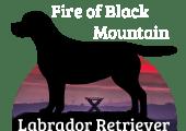 Fire of Black Mountain Labrador Retriever
