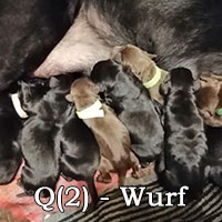 Q2-Wurf-Galerie